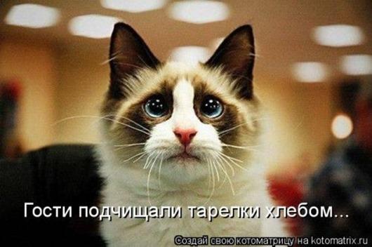 1428677973_kotomatricy-17