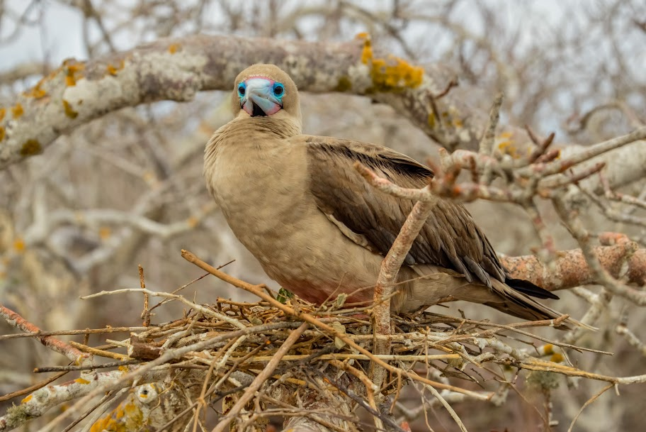 galapagos - Galapagos_FB_2-12.jpg