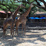 Houston Zoo - 116_8554.JPG