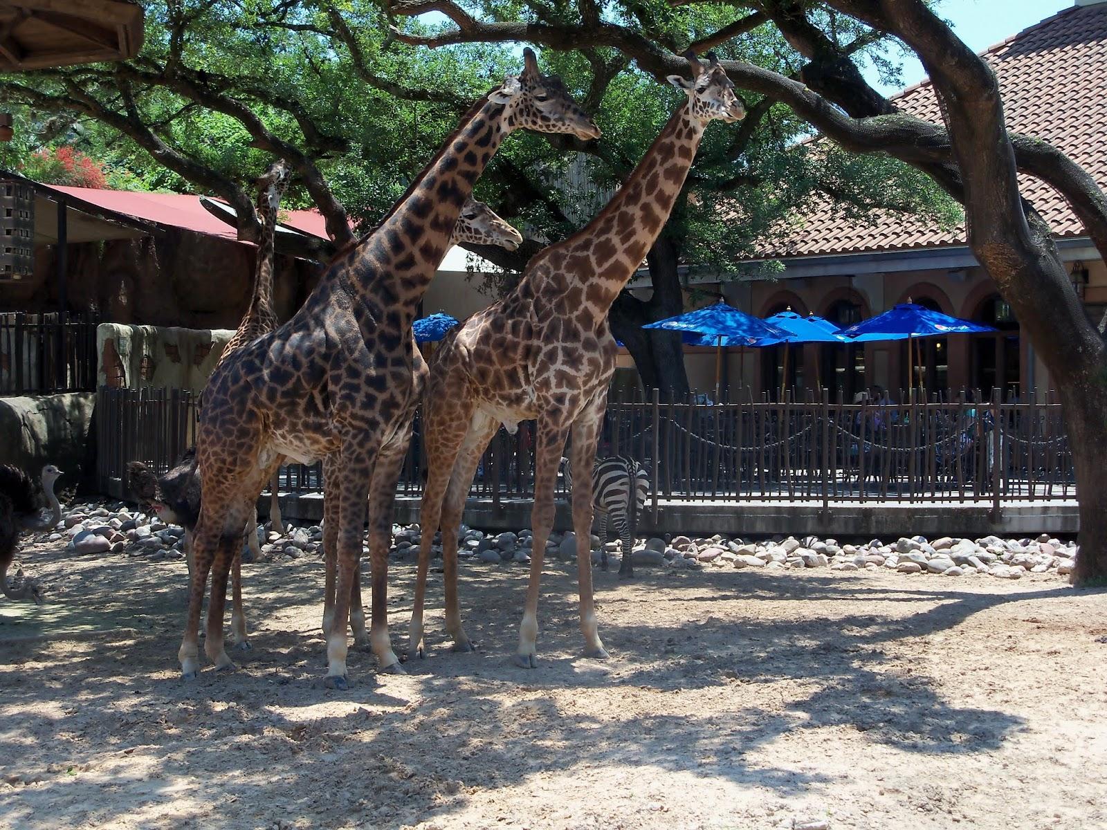 Houston Zoo - 116_8554.JPG
