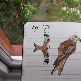 Red Kite :: www.AliceDrawsTheLine.co.uk