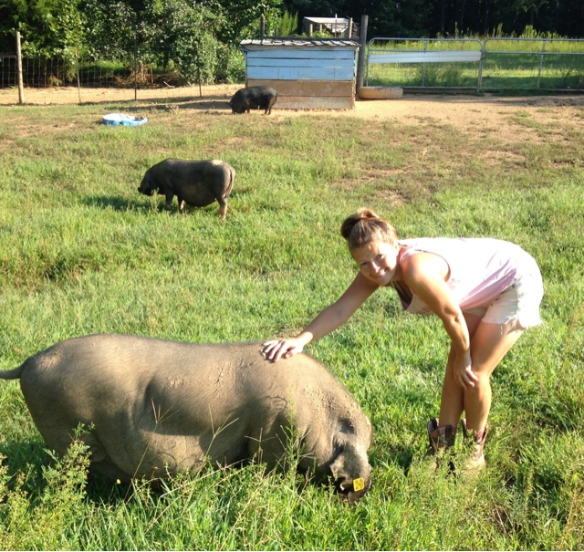 Meishan Pigs are the perfect homestead hog! See why we think so!