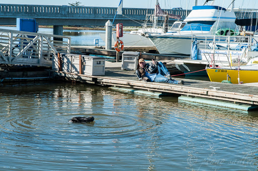 Seals at Moss Landing. From Sea Otters, Sea Lions, and California Seals, Oh My!