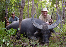 Mr Hans Jauch, Germany took this tight curled bull in thick bush in January with a 458 WM.