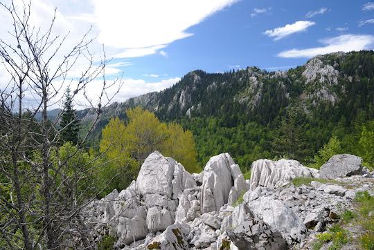 Fels-und Waldlandschaft im Velebit
