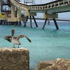 Pelicane (Salt Pier)