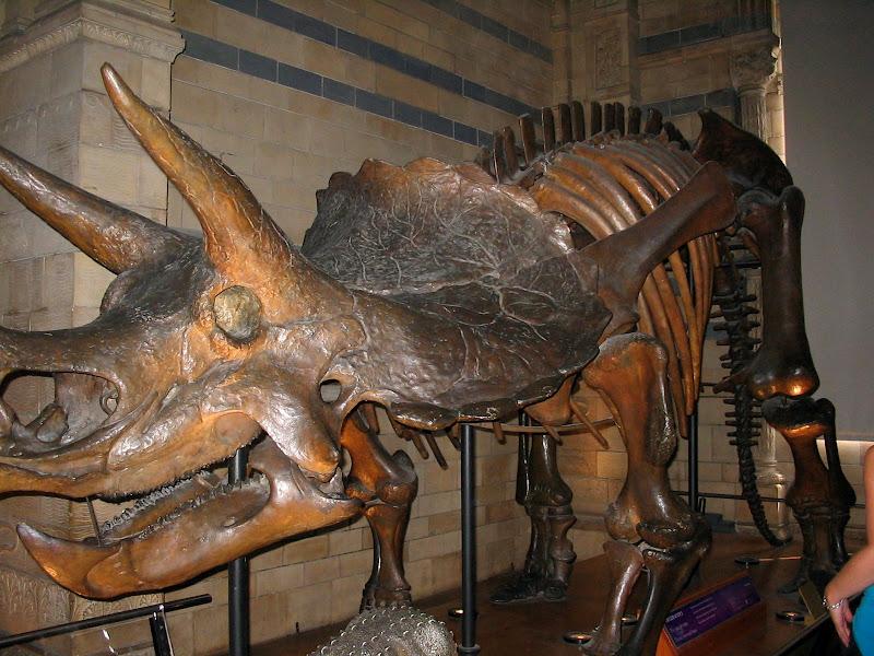 Szkielet zwierzaczka