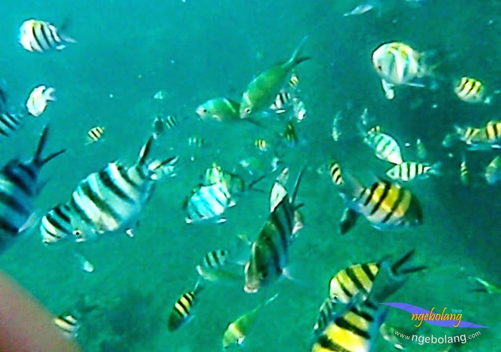 explore-pulau-pramuka-olp-15-16-06-2013-25