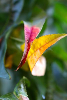 inizi d'autunno di sergio71