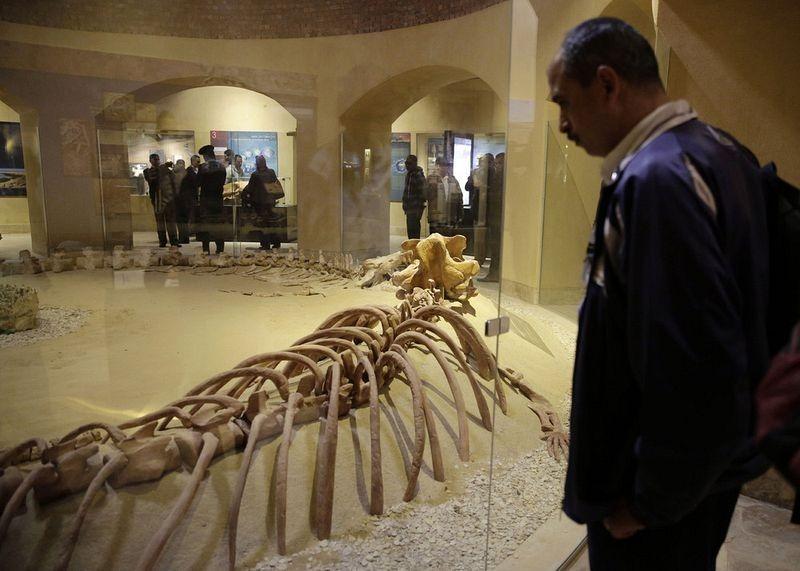 wadi-al-hitan-museum-5