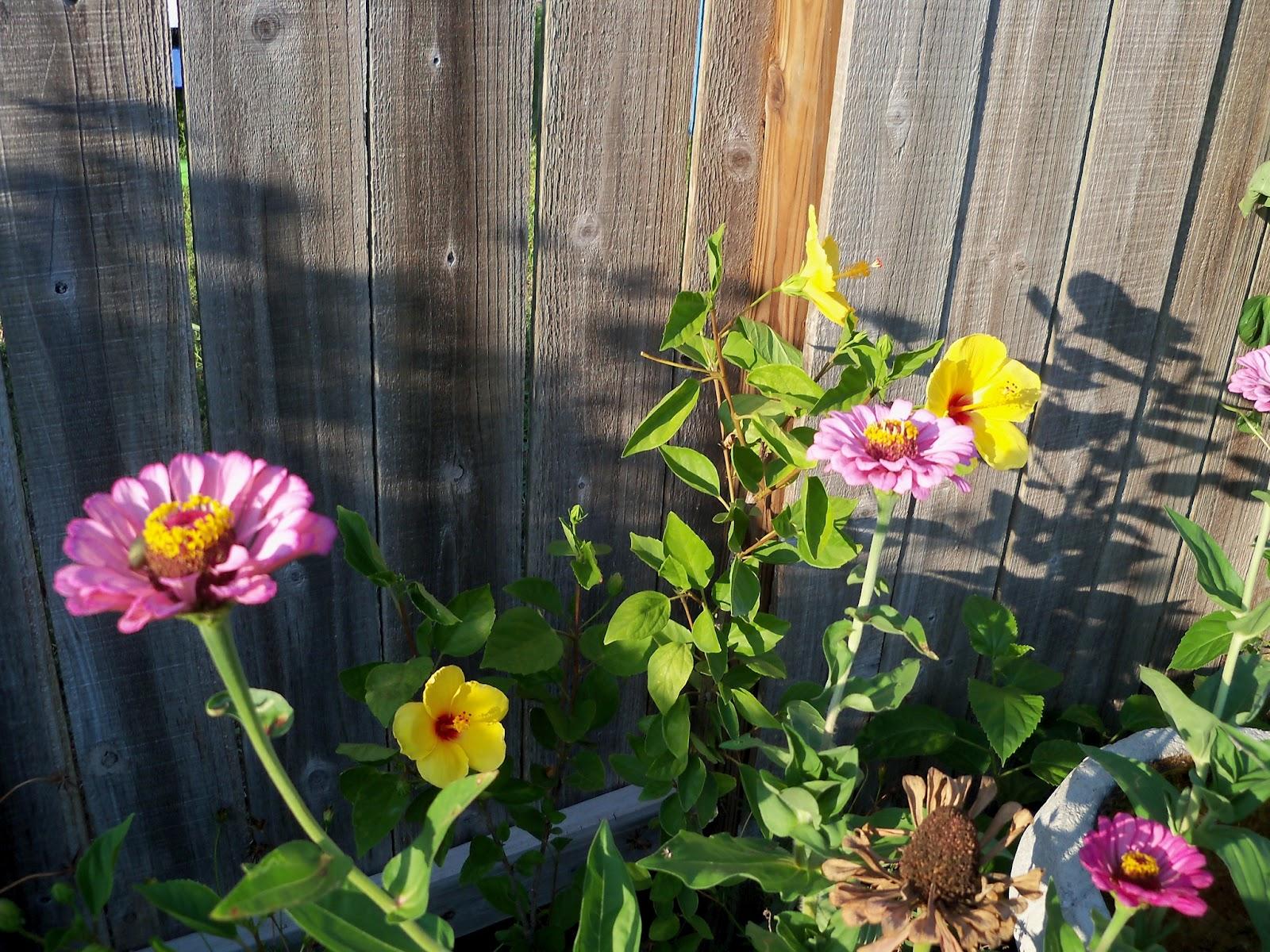 Gardening 2011 - 100_9230.JPG