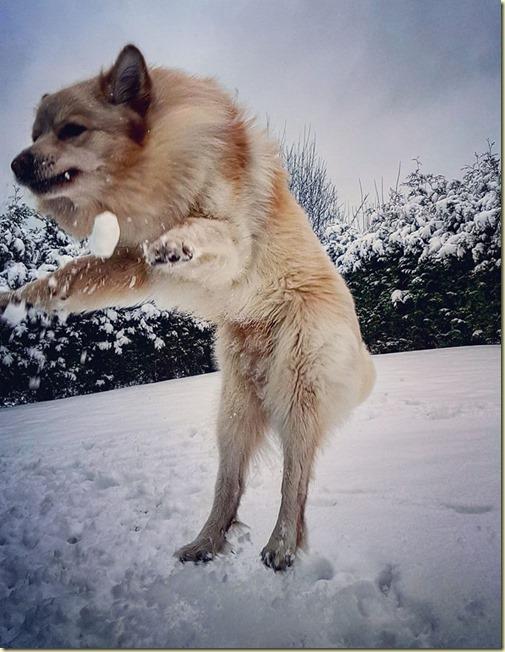 170205 hopp i snø