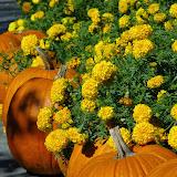 10-26-14 Dallas Arboretum - _IGP4297.JPG