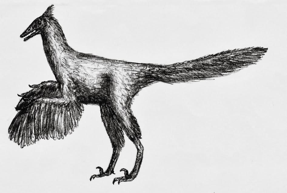 eure dinosaurier-Bilder - Seite 2 Archaeopteryx_lithographica