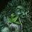 Greenman ejuice's profile photo