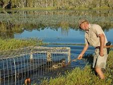 crocodile_harvesting_6L.jpg