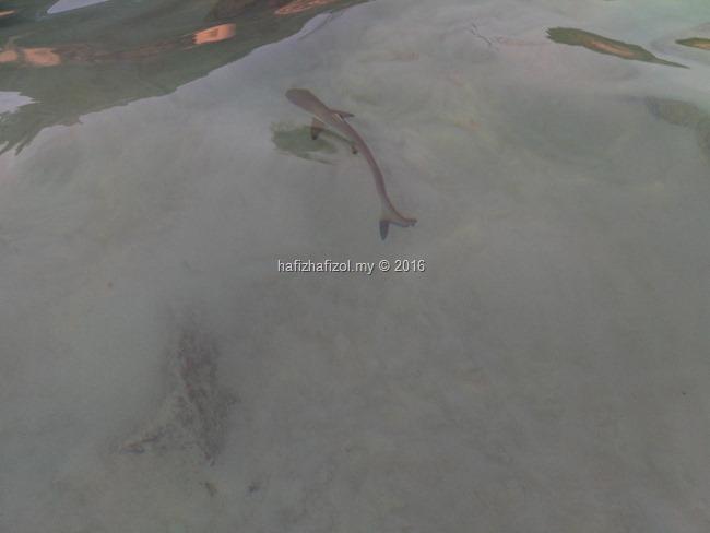snorkeling pulau redang_20