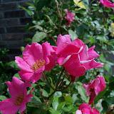 Gardening 2012 - 115_1704.JPG
