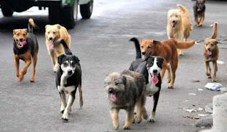 Tenencia responsable de mascotas en Chacabuco