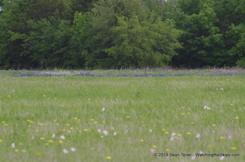 2013 Spring Flora & Fauna - IMGP6374.JPG