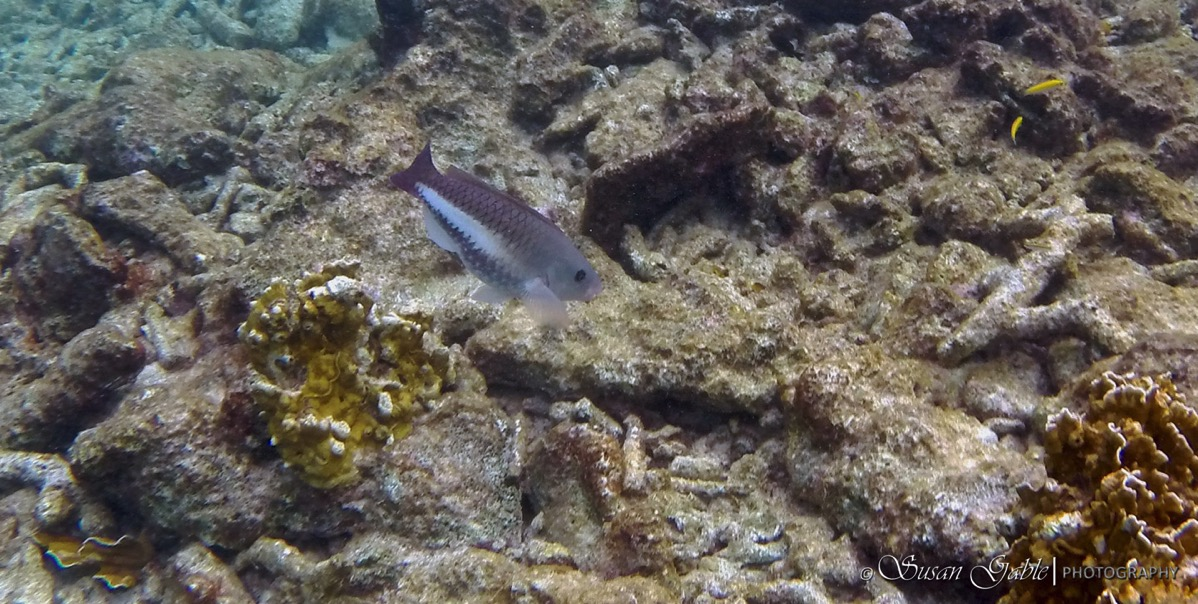 Bonaire GOPR0481
