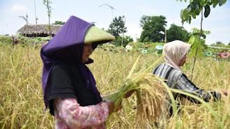 Jawa Barat Kehilangan 100 Ribu Petani Pproduktif, Kata Anggota DPRD