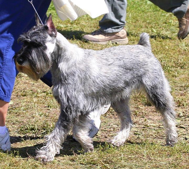 Rachel Jenkins>8-30-09, Bluegrass Classic Dog Show