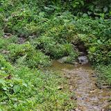 Clairière près du Rio en amont de Las Juntas, 1400 m (Carchi, Équateur), 4 décembre 2013. Photo : J.-M. Gayman