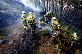 El Fuego Acaba Con 26.388 Hectáreas De Bosques
