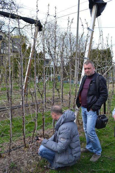 Украинцы на плантации крыжовника