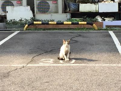 駐車場猫30番