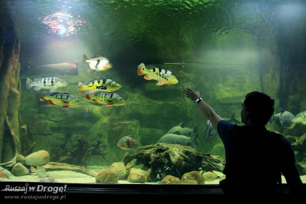 Maciej został rybnym przewodnikiem