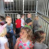 K1A en K1B kinderboerderij