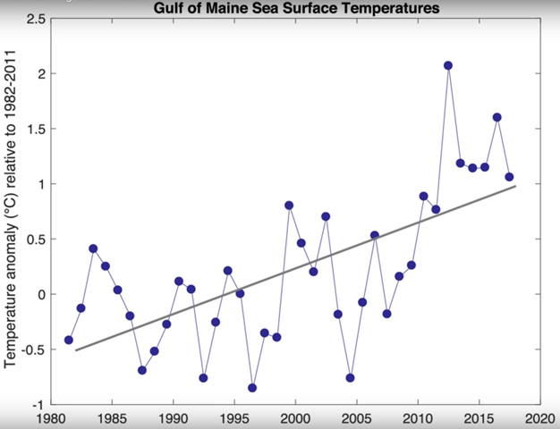 Gulf of Maine sea surface temperatures, 1981-2017. Graphic: Gulf of Maine Research Institute