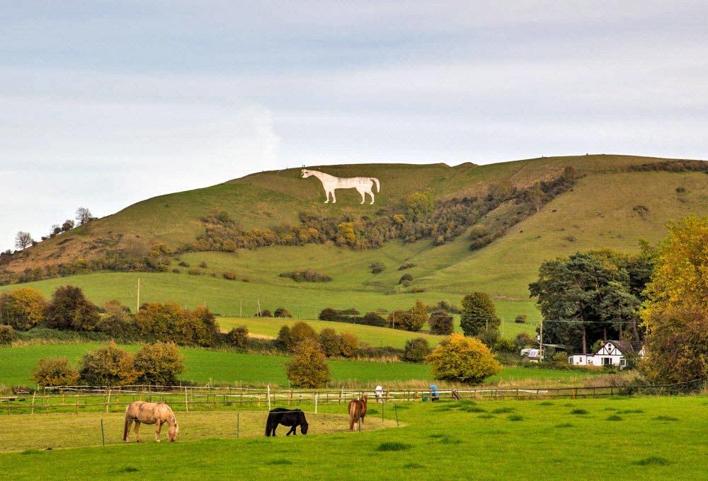 westbury-white-horse-3