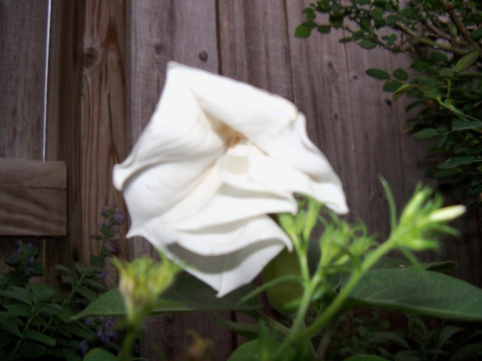Gardening 2011 - 100_8746.JPG