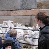 Bevers en Welpen- Lammetjes kijken - IMG_7672.JPG