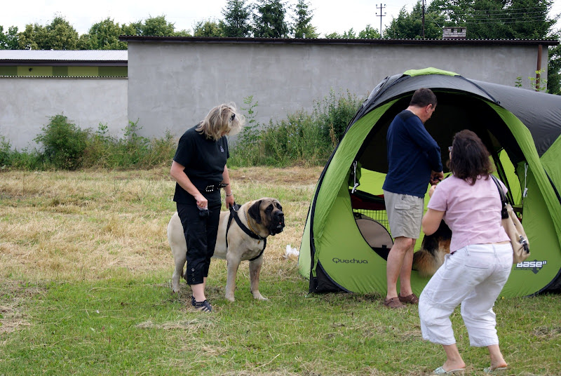 Wystawa psów - dsc00336.jpg