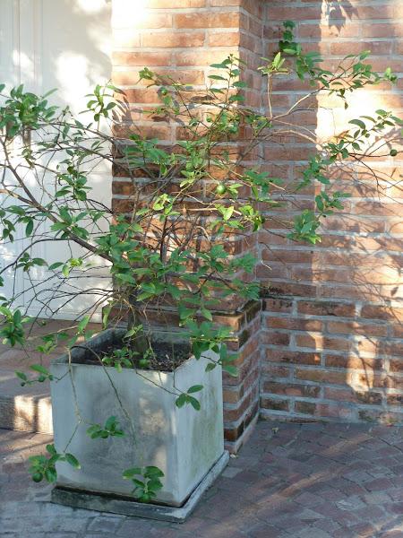 Arboles frutales cuidar de tus plantas es for Cultivo de arboles frutales en macetas