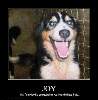 motivational funny joy dog hear keys jingle, that funny feeling you get when you hear the keys jingle, joy, dog, hear keys, hear keys jingle, funny motivational animals