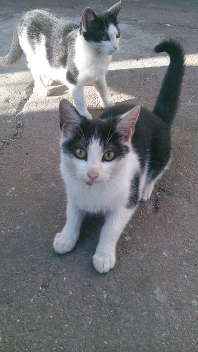 Пример фото котов на Asus Padfone