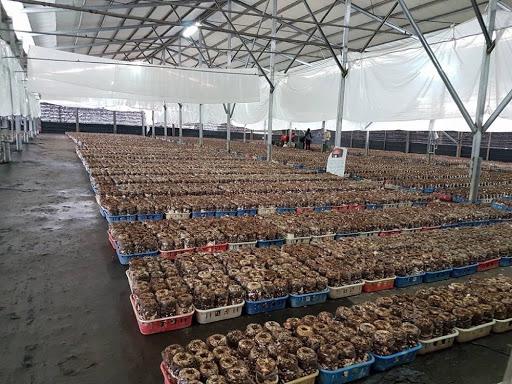 Mushroom farm in Taichung Taiwan