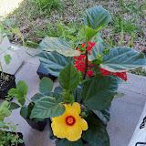 Gardening 2010 - 101_0200.JPG