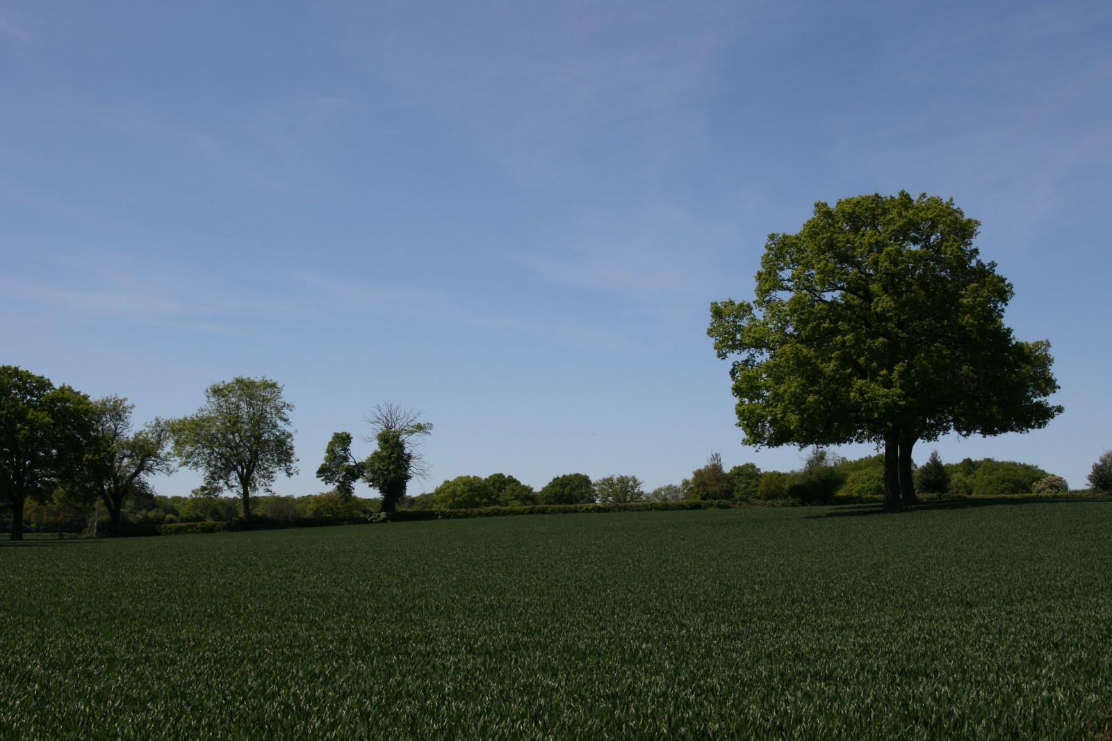 1005 038 Chesham to Great Missenden, England Tree in a field