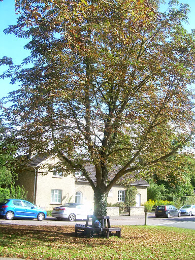 Autumn leaves in Great Shelford