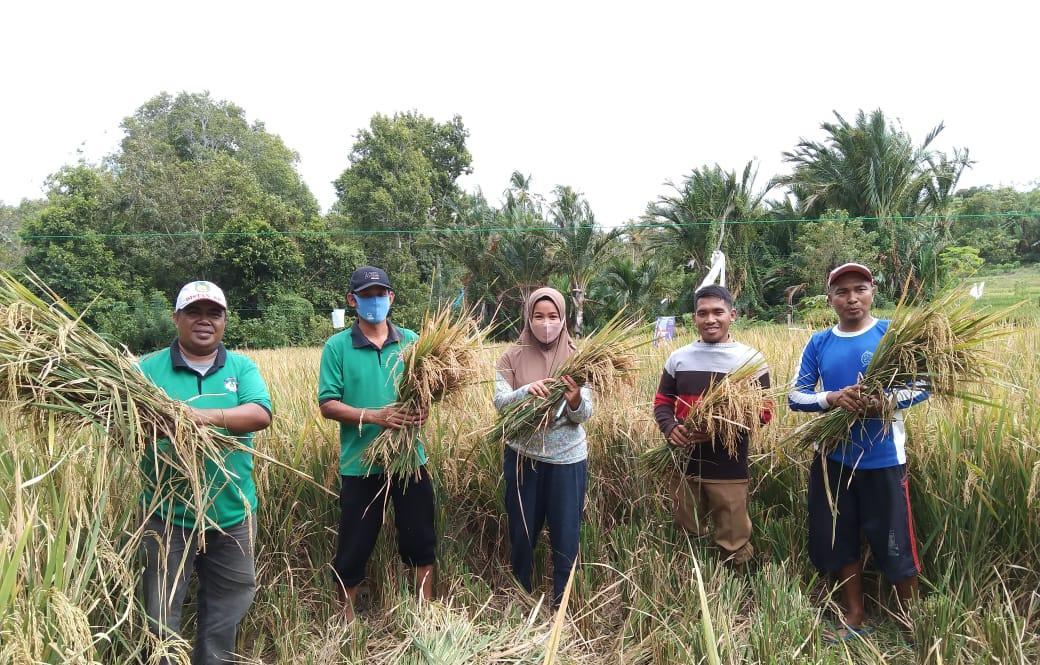 Semangat Petani Bontobaru Kepulauan Selayar Panen Padi di Masa New Normal
