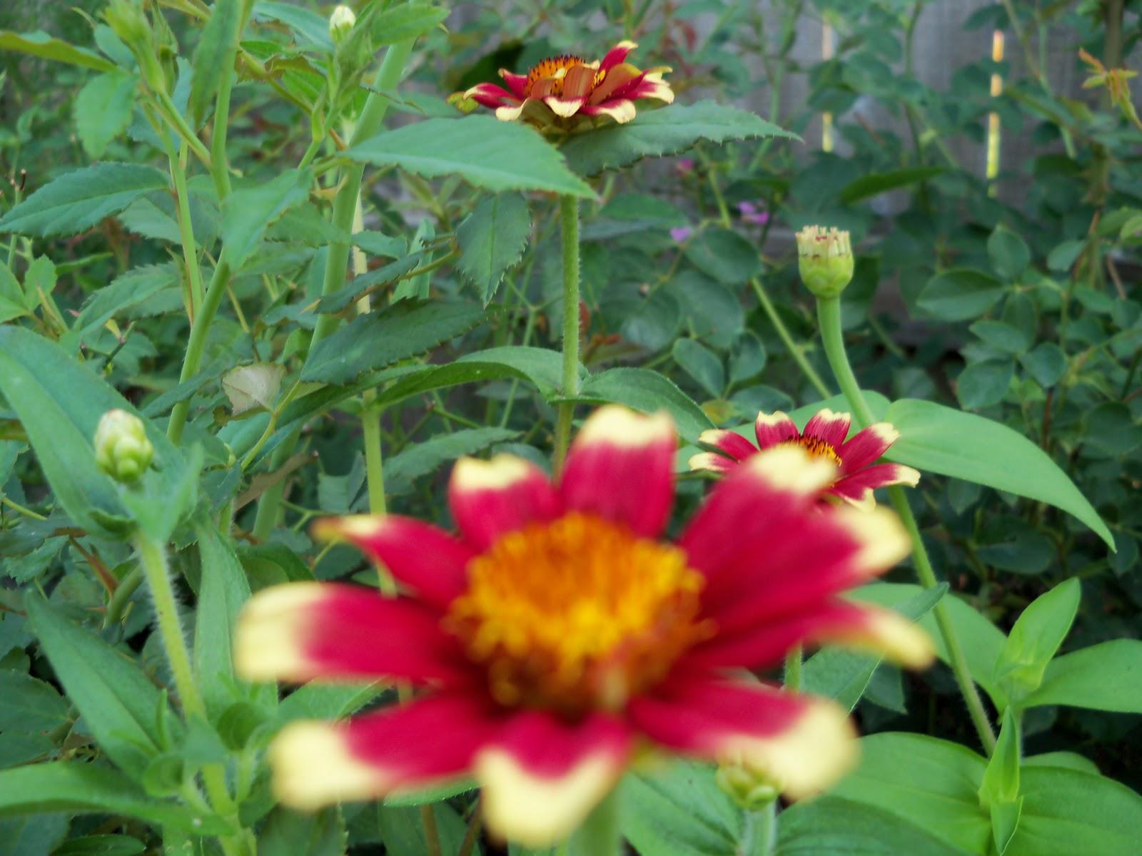 Gardening 2010, Part Two - 101_2997.JPG