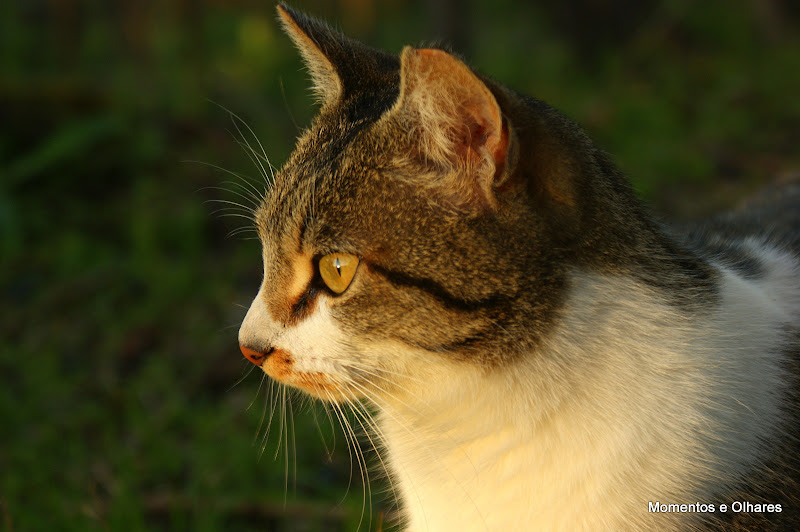O Gato da Póvoa Dão