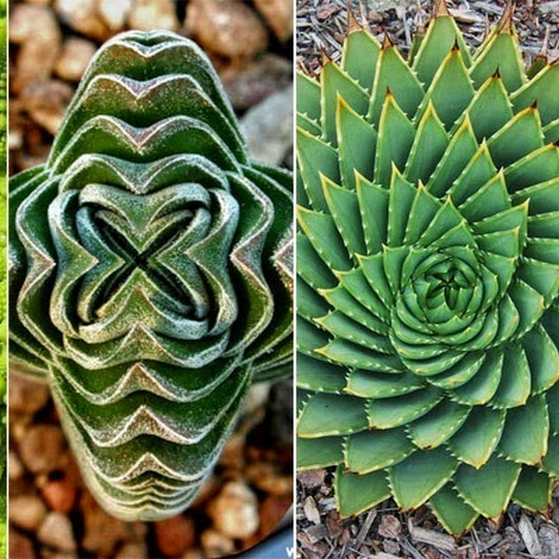 The Geometry of Plants