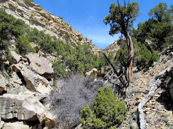 Boulder- and brush-choked canyon bottom